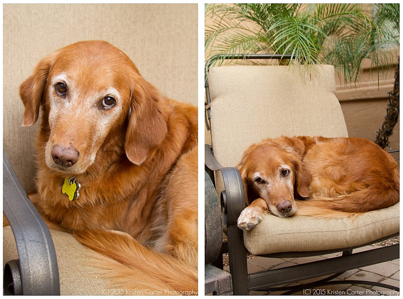 Gilbert AZ Pet Photographer-Kristen Carter Photography_0030.jpg