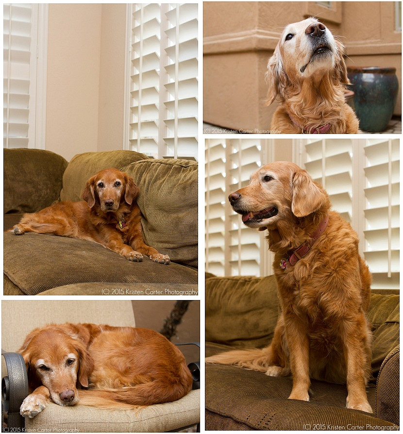 Gilbert AZ Pet Photographer-Kristen Carter Photography_0032.jpg