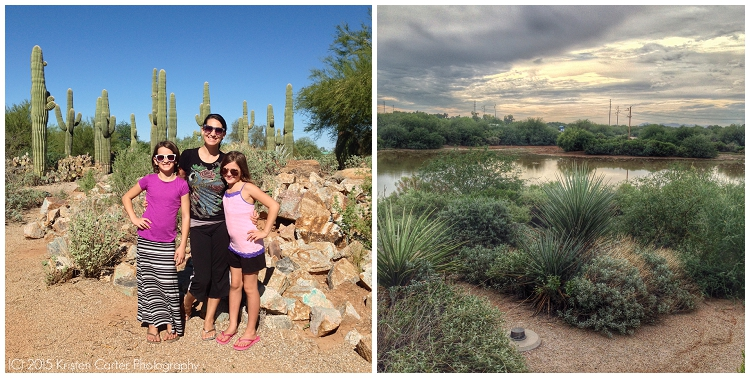 Things to Do in Gilbert AZ Riparian Preserve RCarterGuy