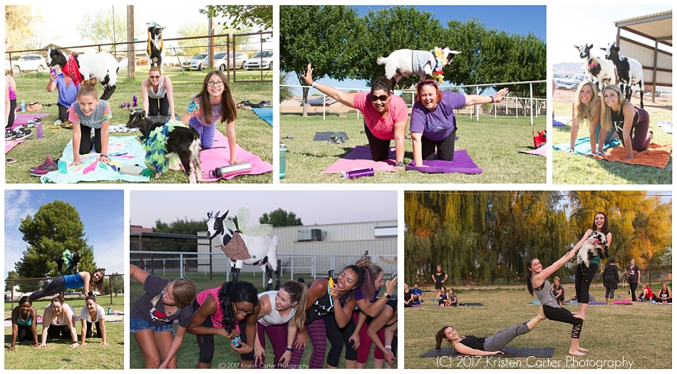 Goat Yoga in Arizona